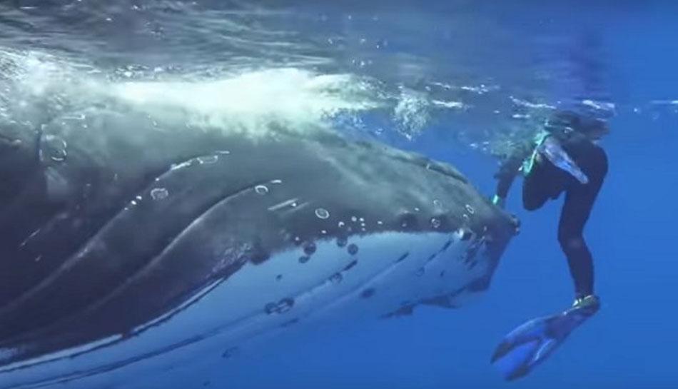 VIDEO: વૈજ્ઞાનિકની રક્ષા માટે WHALE અને SHARK વચ્ચે થઈ લડાઈ, પછી...