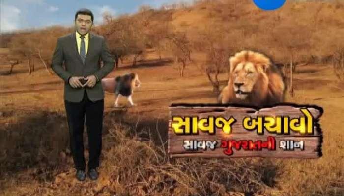 Dhari : One More lioness died in Dalkhaniya Range,Dhari
