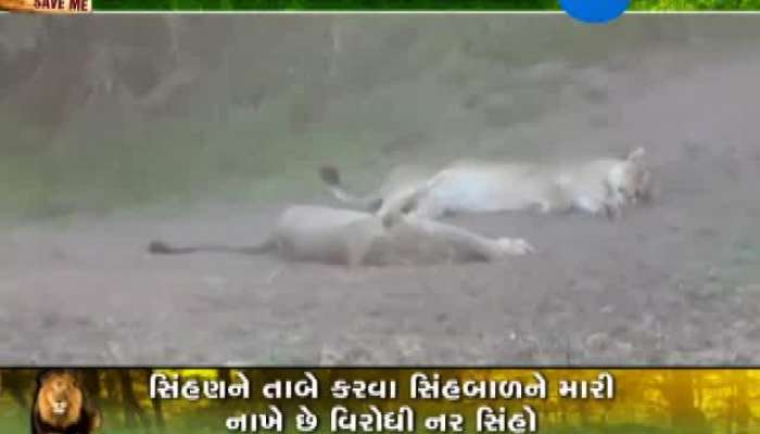 What is the view of Amreli people on Lion Death