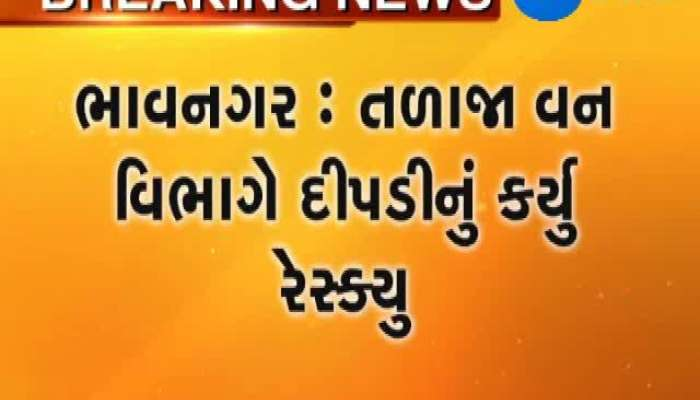 Bhavnagar  Talaja forest dept rescue pantheress from Vataliya