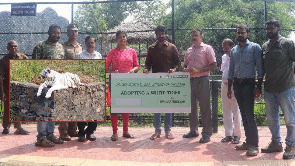 வண்டலூர் பூங்காவில் வெள்ளைப்புலியை தத்தெடுத்த சிவகார்த்திகேயன்!